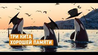 3 кита хорошей памяти