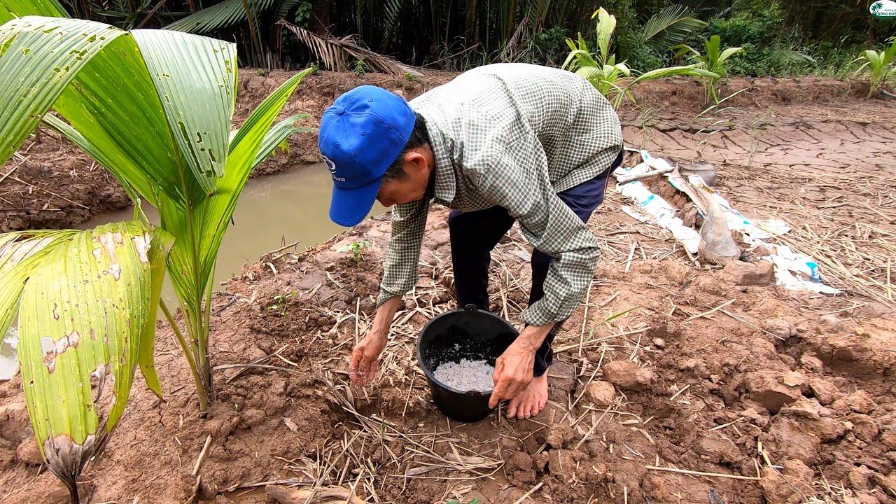 Cậu Năm Thuốc Còng Bằng Xác Dừa Khô| Uncle Making Pest Control From Dry Coconut
