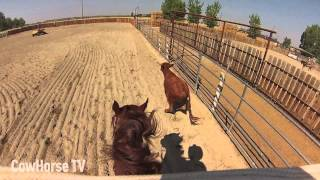 Jake Telford: GoPro Cam on a Cow Horse