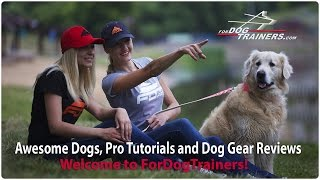Awesome Dogs, Pro Tutorials And Dog Gear Reviews - Welcome To Fordogtrainers!