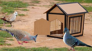 Building most beautiful house from Box paper for Bird trap - DIY Simple bird trap