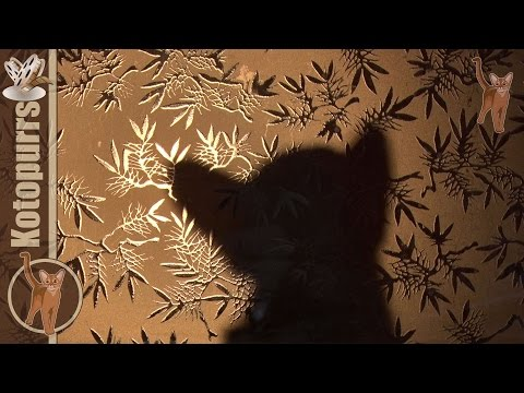 Cat's shadow theater [kotopurrs]