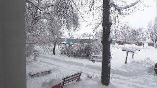 Снег и помидоры!
