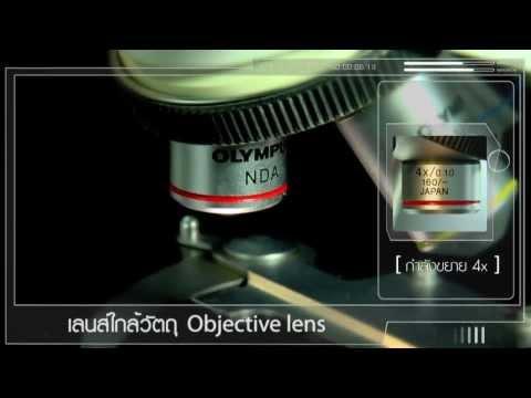 ส่วนประกอบและการใช้กล้องจุลทรรศน์แบบใช้แสง