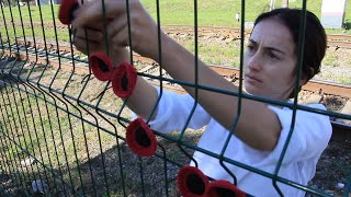 Beslan: 186 Knitted Poppies In Memory Of Dead Children