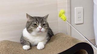 運動嫌いな猫にダイエットさせようとしたらこうなりましたw