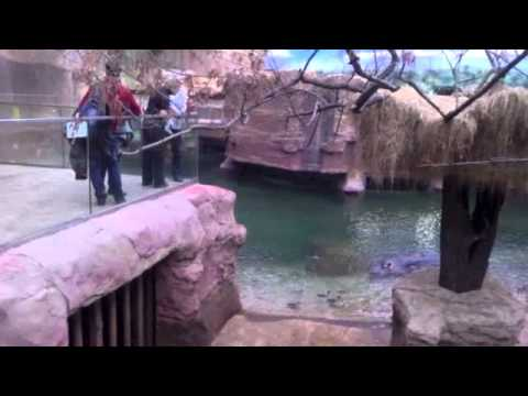 Have Fun! A Danny Fingers Travel Show Episode 4, Wroclaw, Poland Zoo