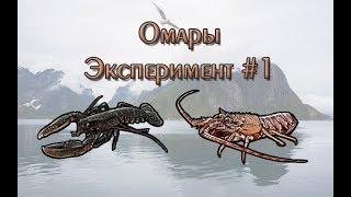 Русская Рыбалка 3.99 (Russian Fishing) Омары. Эксперимент #1