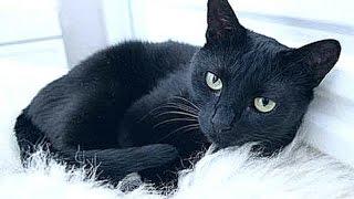 Влог-Одни Дома :как страшно:-:чёрная кошка:.