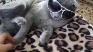 прикол Кот в очках