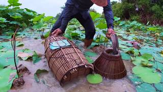Fishing daily - Catfishes & Mud fishing by Hands Use Bamboo fishing trap in Mud by a Fisherman