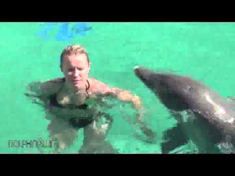 Experience the Dolphin Academy in Curacao
