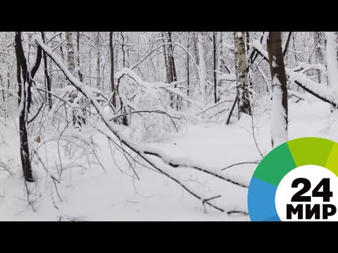По пояс в снегу: рекордный снегопад в Японии унес несколько жизней - МИР 24