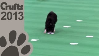 Obedience Dog Championships  Day 3  Scent Tests  Crufts 2013