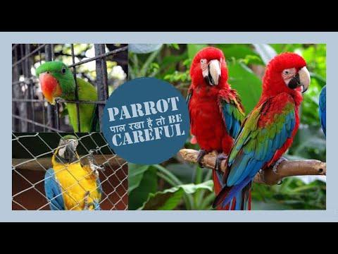 यदि आपने तोता पाल रखा है तो सावधान, careful thumbnail