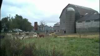 2012-09-28 Monster Llama Farm in Ontario