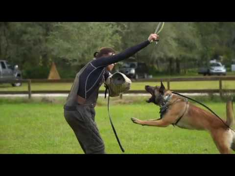 The Most Important Command in Dog Training!