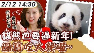 【中天互動LIVE】20210212 動物園走春「圓寶」拜年! 貓熊年菜報你知