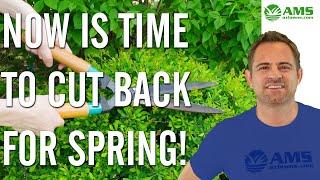 Spring Time Shrub Trimming & Pruning