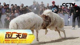 《农广天地》全国农民赛羊邀请赛 20190430 | CCTV农业