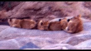 2 Lionesses and 7 cubs - 3 July 2012 - Latest Sightings