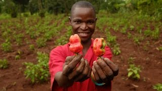 A Working Future for young people in Uganda