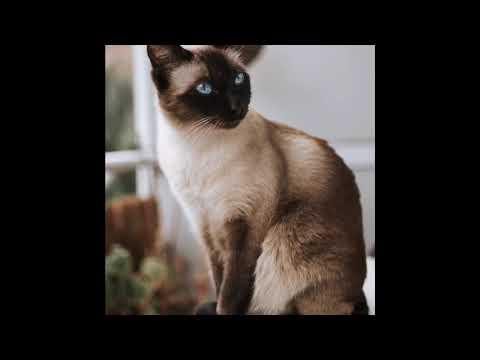 Top 5 Most Friendly Cat Breeds