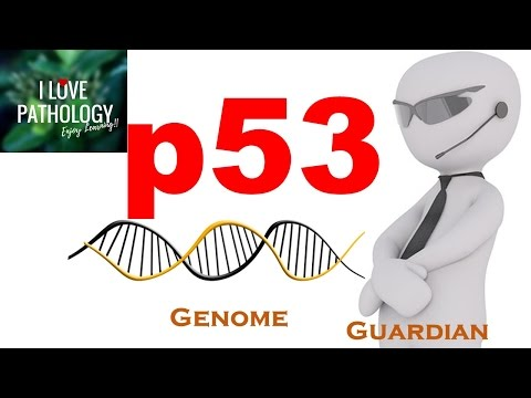 p53 gene: The Guardian of the genome. functions, regulation and inactivation