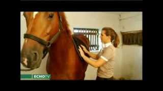 Fontos megtanulni a ló helyes felszerelését!