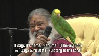 Amazon Parrot Hanuma talks instantly with Swamiji in front of thousands