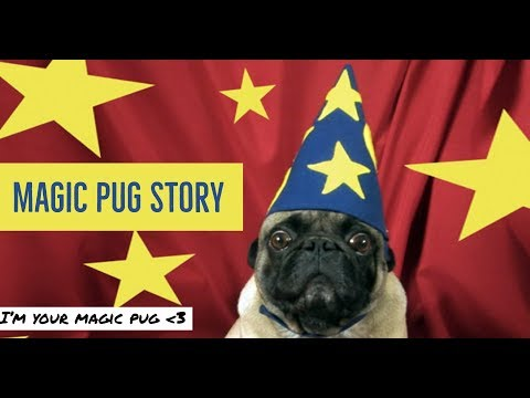 I'm Your Magic Pug: What Cryptocurrencies Would You Like to Me to Review?🌠🎁🎅☄