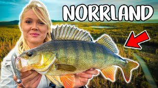Exploring NEW Waters In Northern Of Sweden BEST PERCH FISHING IN SUMMER Team Galant