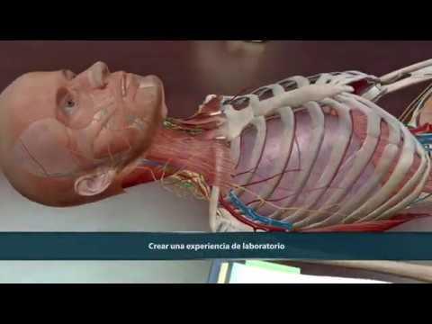 visible-body-|-atlas-de-anatomía-humana-2021