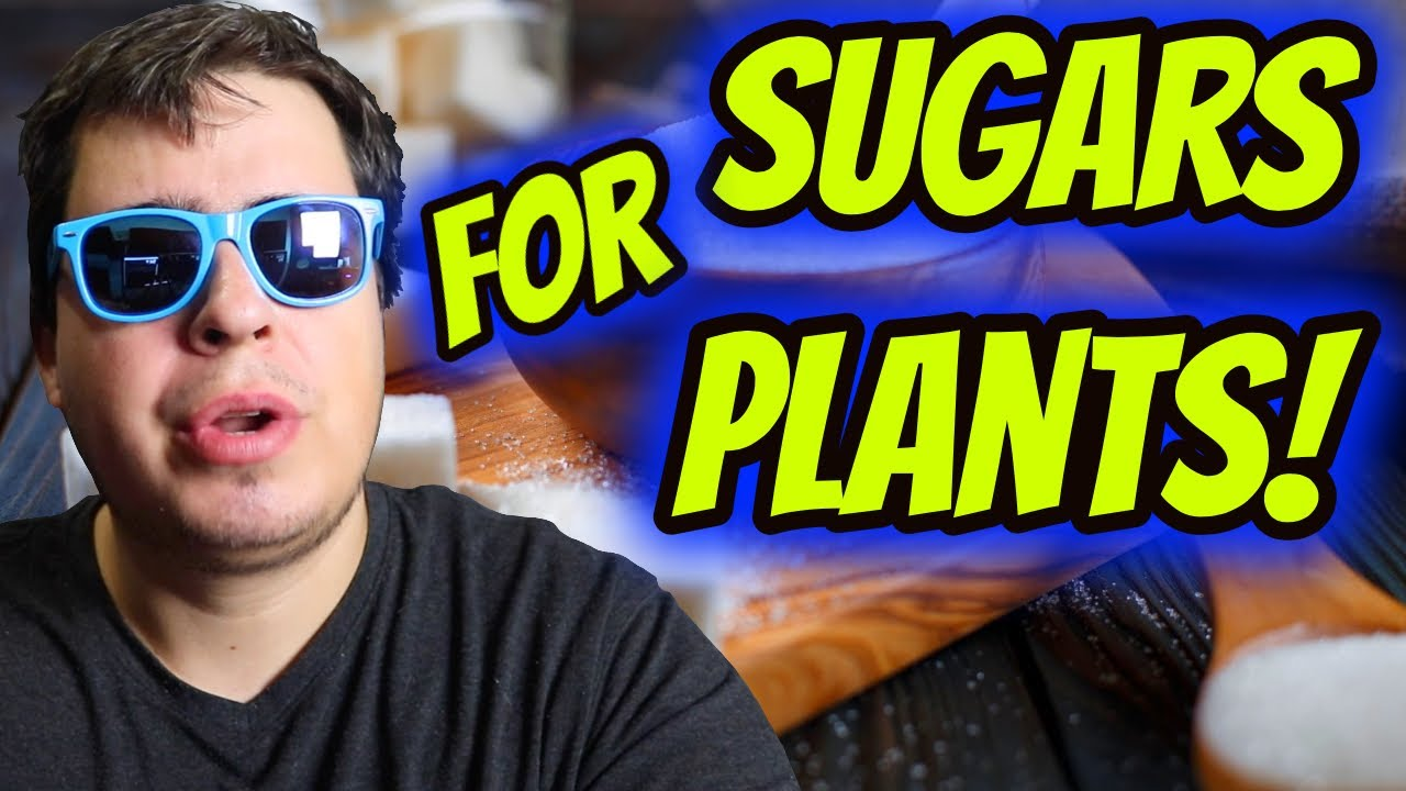 HERE'S WHY SUGARS ARE MORE IMPORTANT TO YOUR PLANTS THAN YOU THINK!