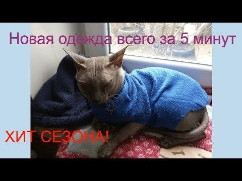 Как сшить одежду для кошки