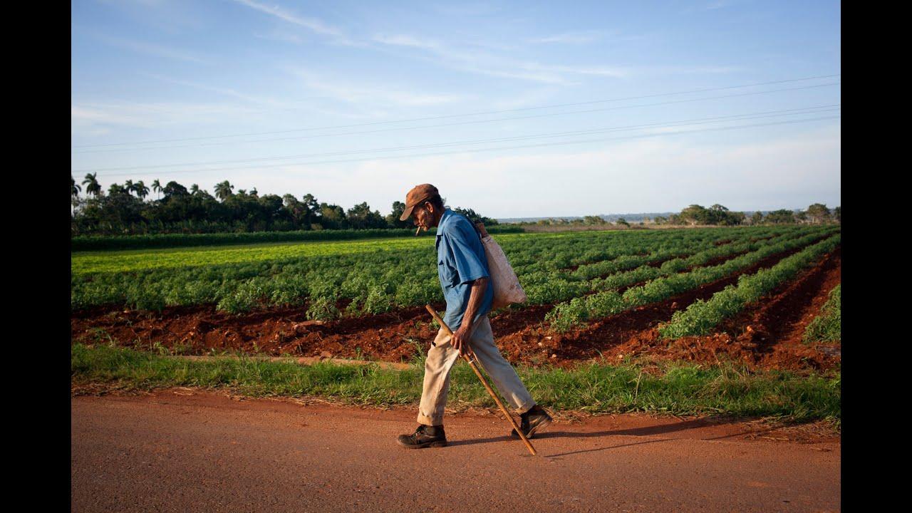 What Cuba can teach America about organic farming