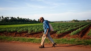 What Cuba can teach America about organic farming