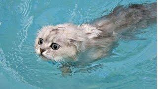 коты и неудачные моменты с водой Смешное видео с животными 2016 - Самое лучшее!