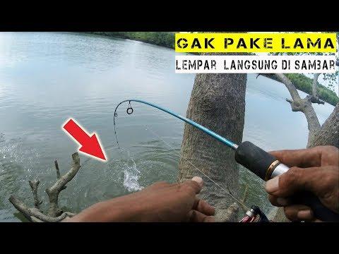 Mancing Ikan Barramundi Di Sungai Sesumpu