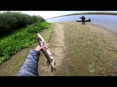 видео: Рыбалка.Попали на трофейную ЩУКУ!-)