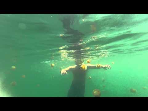 Jellyfish Lake Pulau Kakaban, Indonesia