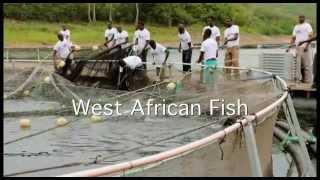 West African Fish Ltd. Ghana