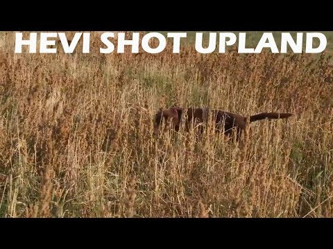 HEVI SHOT Upland Load, Shot Size And Upland Hunt
