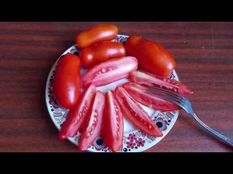 Сорт томата Дрова
