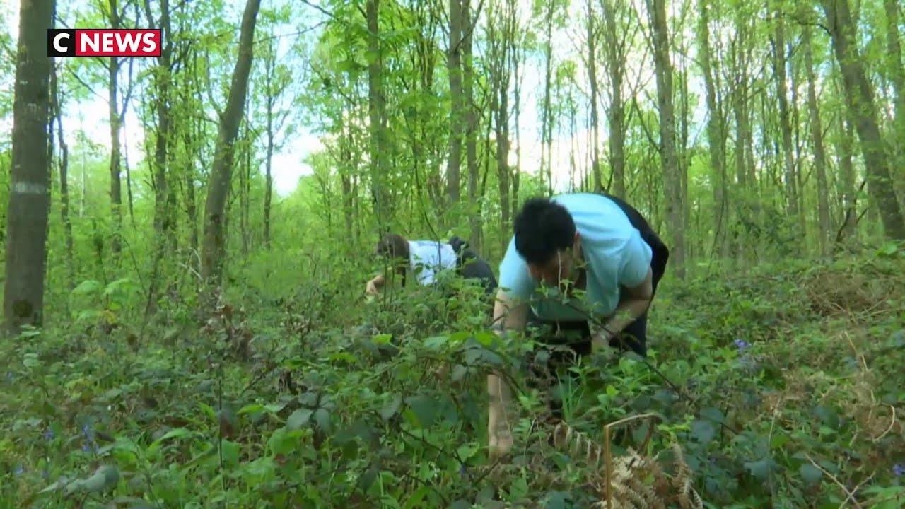 Comment Planter Du Muguet la tradition du muguet ne se perd pas