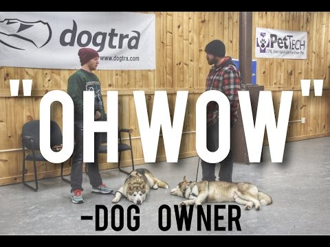 Stop Your Dog from Pulling You! 2 Huskies stop pulling in 20 min with America's Canine Educator