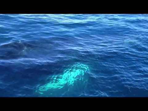 Pelagic Bird trip upstaged by Humback Whales