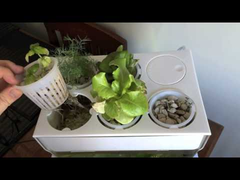 Top Fin 55 Gallon Aquarium Review & Tips from YouTube · High Definition · Duration:  16 minutes 9 seconds  · 8,000+ views · uploaded on 12/22/2016 · uploaded by SenninhaPSX1