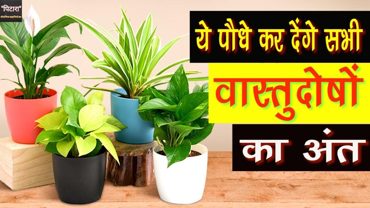 सावन में लगाएं ये पौधे, ख़त्म हो जायेंगे सारे वास्तु दोष | Plants for Vastu Dosh nivaran | VastuPlant