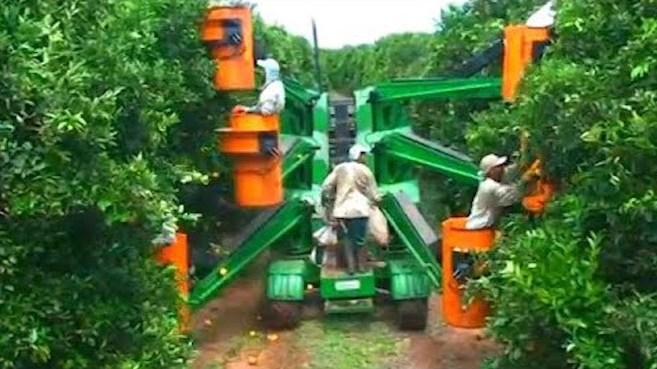 How Oranges Are Harvested in The Garden, The Most Modern Agricultural Harvesting Machines 2020